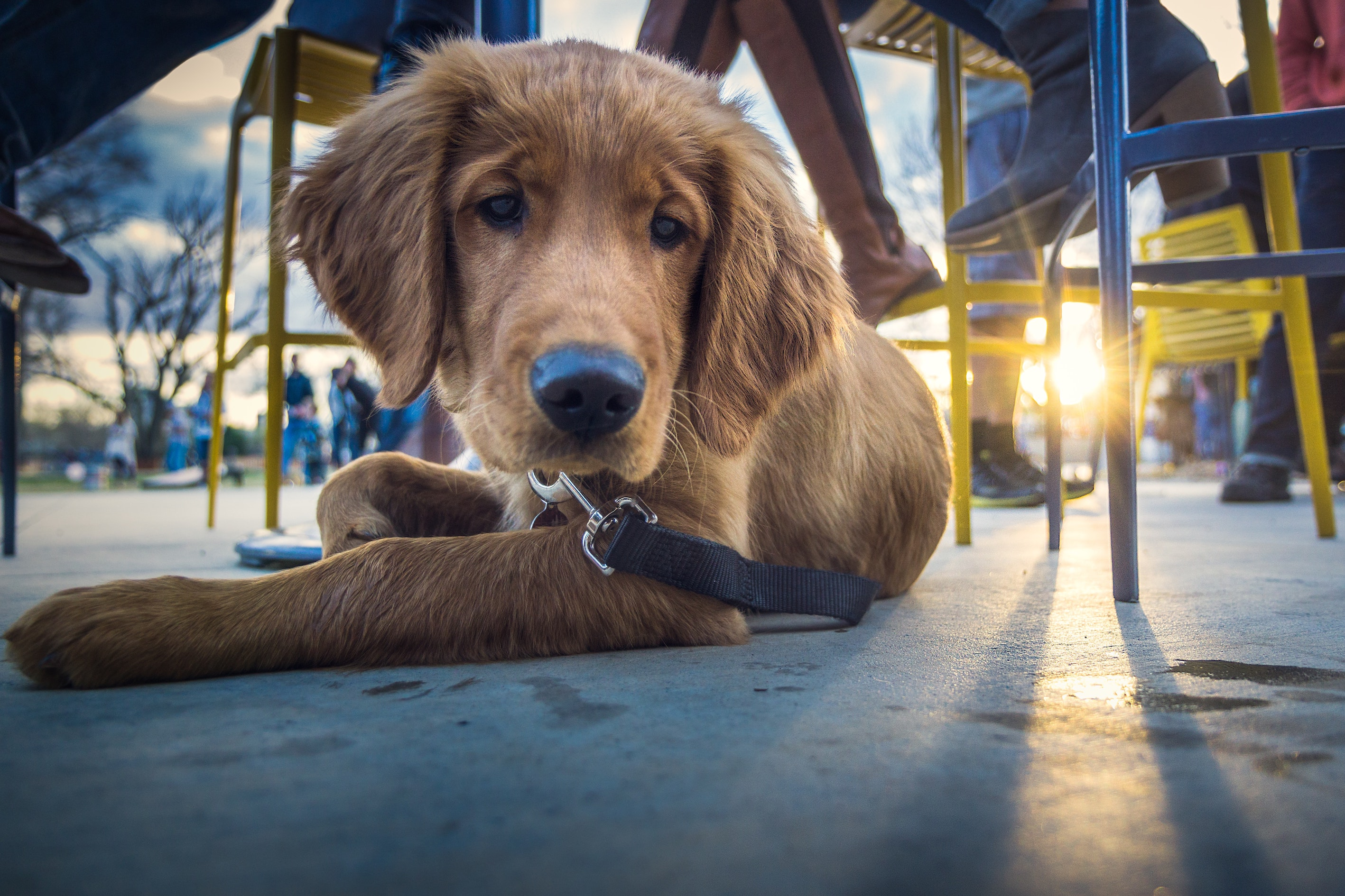 Should Dogs Be Allowed In Cafes?